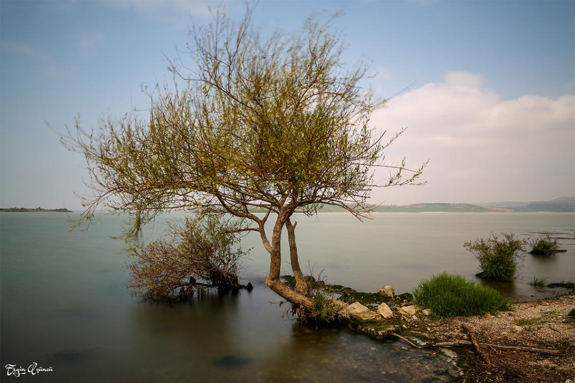 Gölyazı