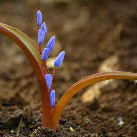 Bahar Sergisinden