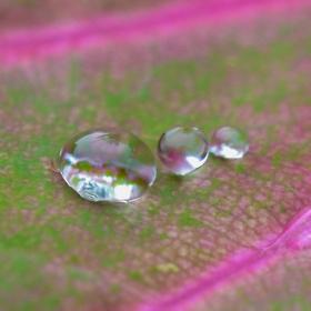 Three dews