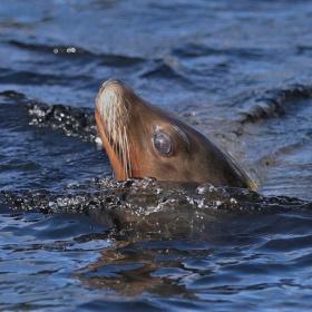 A moment of a sea lion