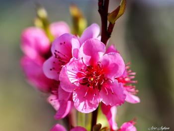 İlkbaharın Güzellikleri.