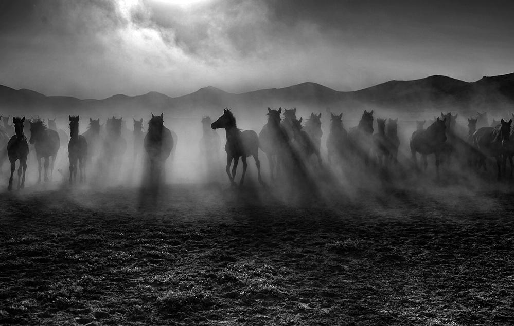 Yılkı Atları.