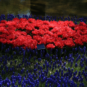 Red and deep blue …