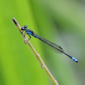 Mini Dragonfly