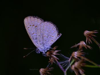 Butterfly night