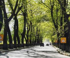 Ağaç Tüneli