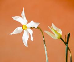 Bahar Güzeli