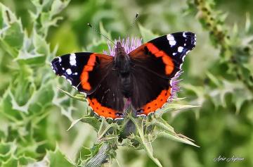 Kelebeğin Doğası..