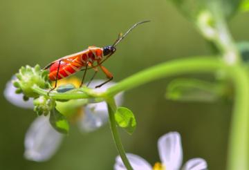 orange insect