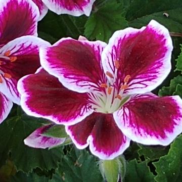 Sessiz çiçekler 5