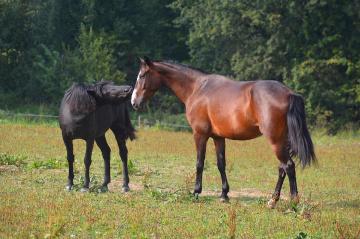 ... Horses 2