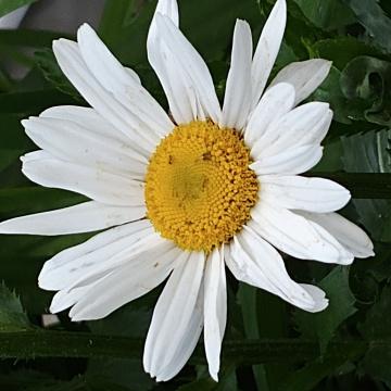 Sessiz çiçekler 6
