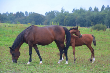 ... Horses 3 - old and young