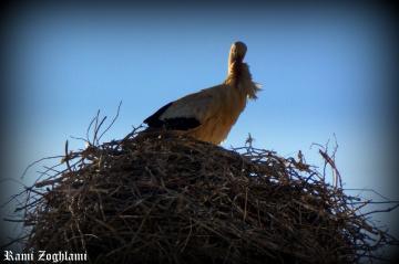A bird building its nest
