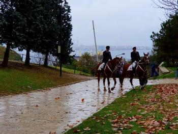 TopKapi Horses