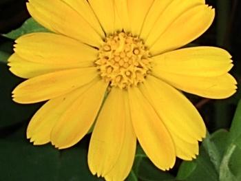 Sessiz çiçekler 7
