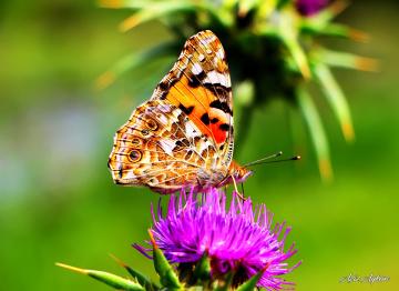 Kelebek Ve Doğa :))