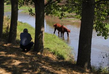 At Ve Bakıcısı...