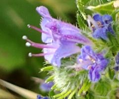 Sessiz çiçekler 8