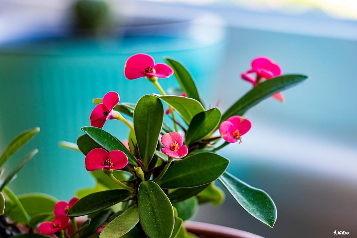 Bir Çiçek