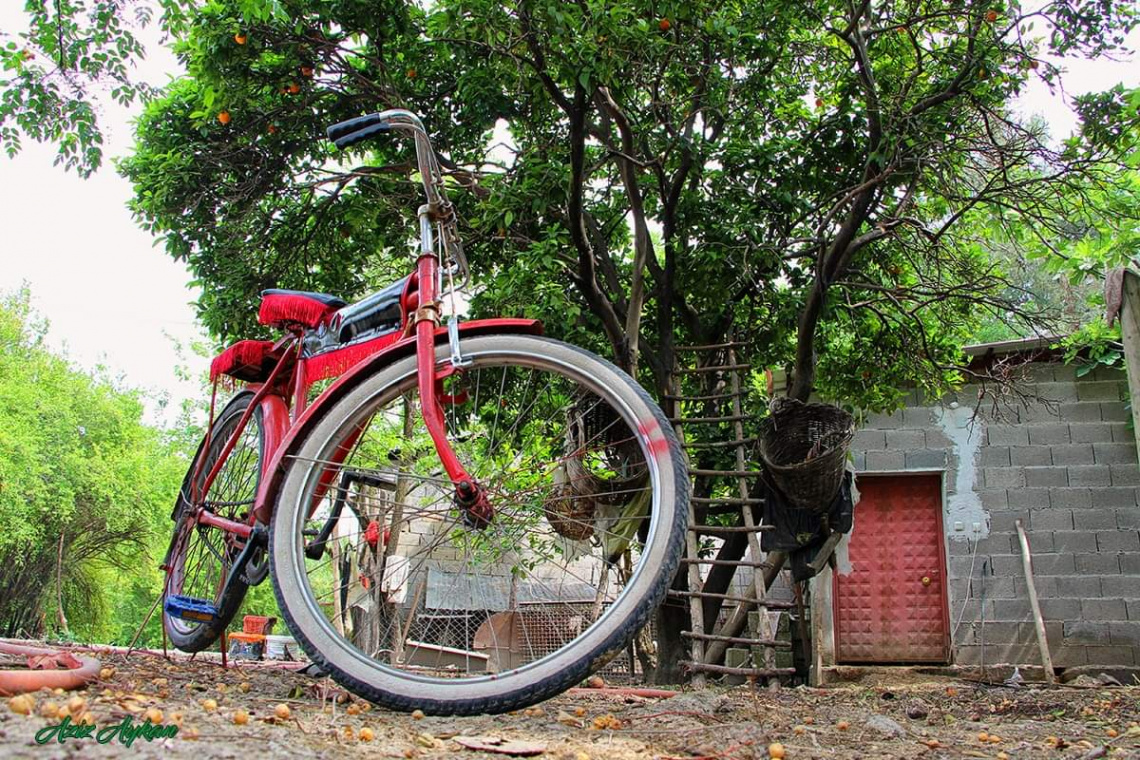 Ben Diyim Velespit  Siz Deyin Bisiklet :))