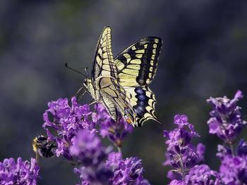 on purple