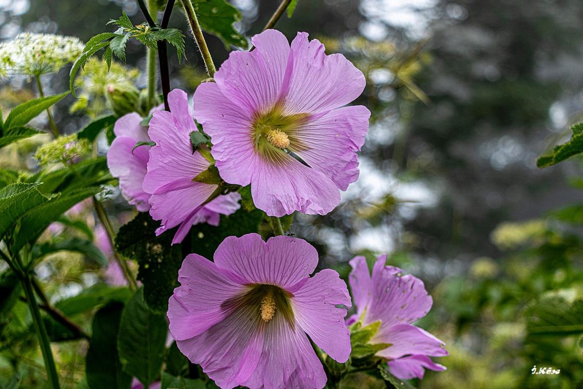 Kartepe Çiçekleri
