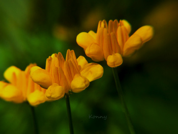 tiny yellow flowers ...