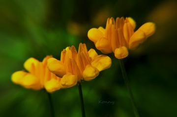 tiny yellow flowers ...