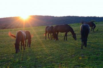 Sunrise at the horse farm