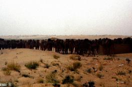 Always Kamels
