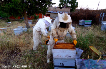 work of beekeepers