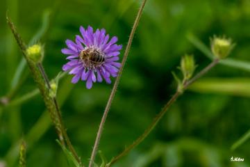 Çiçek ve Arı