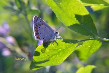 Butterfly & morningsun