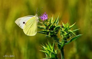 Kelebek Ve Çiçek..