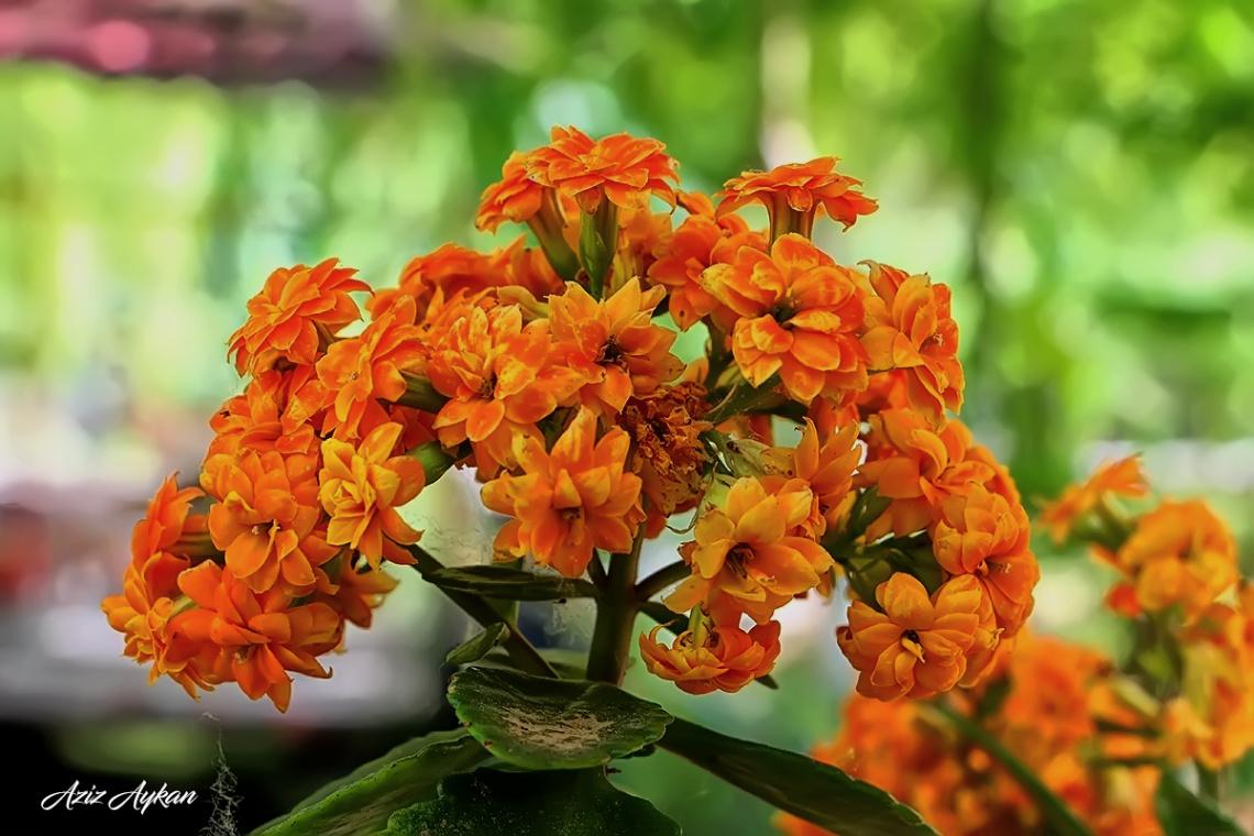Çiçekler Dalında Güzeldir..
