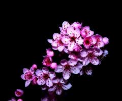 nocny kwiat
