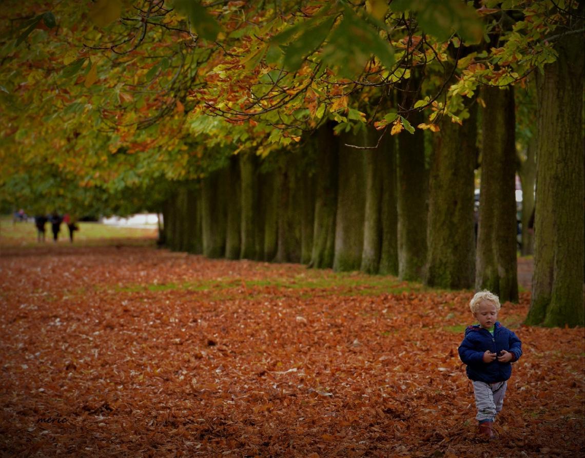 Alır gider beni sarı rüzgârlarıyla sonbahar..