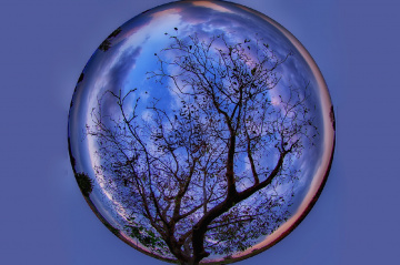 Ağaç Küre