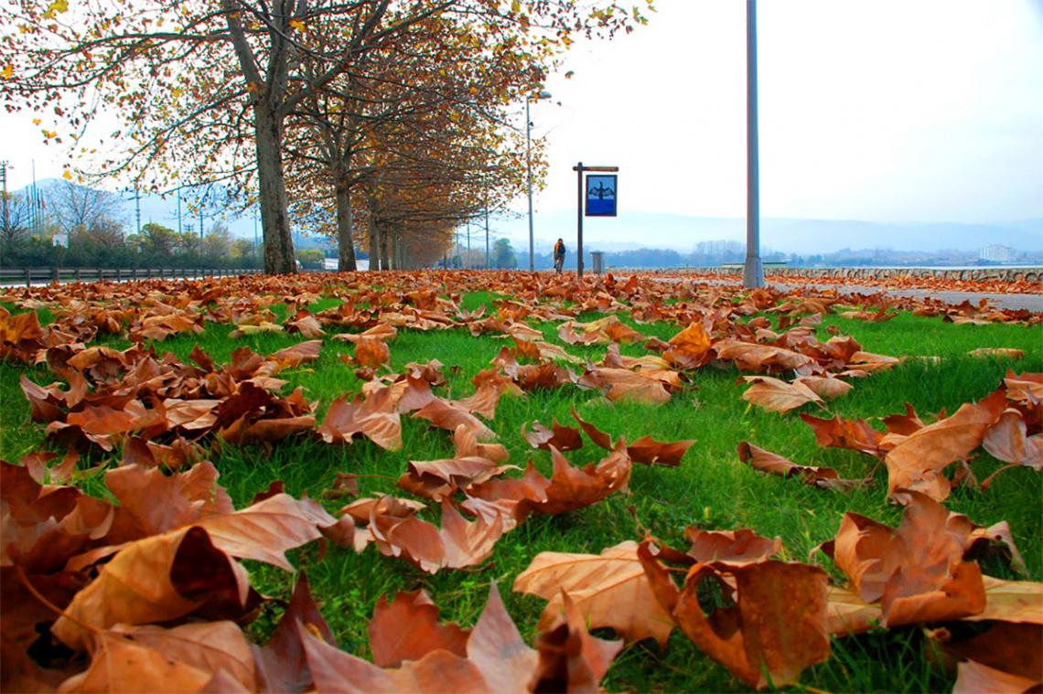 Sonbahar & Sarı Yapraklar