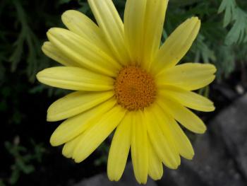Pétalas amarelas