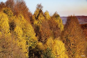 Ormanların Rengi