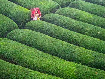 Çay Bahçelerinde.ÇAYELİ.2019