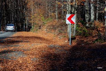 Orman Yolu