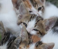 şirin kediler