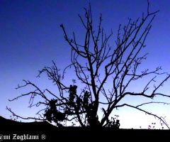Tree Silouhette