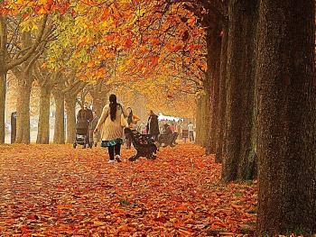 Yine geldi sonbahar döküldü yapraklar
