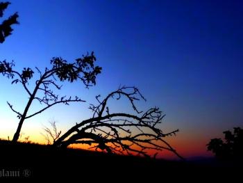 Magic Sunset, Magic Tree