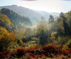 Zonguldak~Muslu Ormanlığı