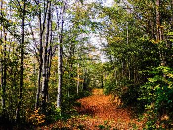 Doğa'da sonbahar renkleri